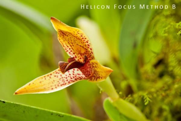 cr-orchid-b