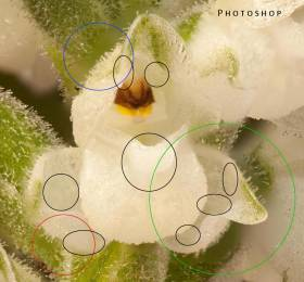 orchid-ps-crop-3
