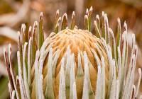Plant in Paramo swamp, six slice focus stack