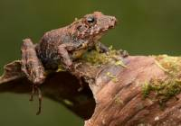 Spring Rain Frog