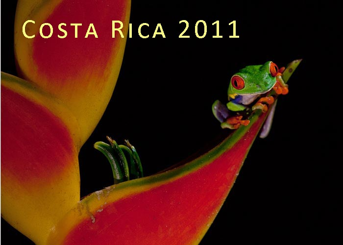 Costa Rica 2011 The Art of Biodiversity Part I