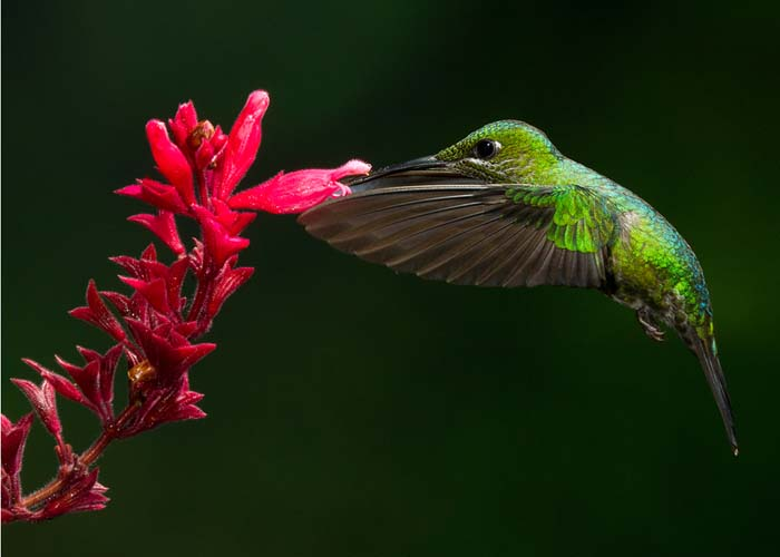 Costa Rica 2011 The Art of Biodiversity – Part 4