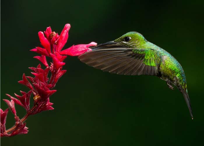 Costa Rica 2011 The Art of Biodiversity – Part 4