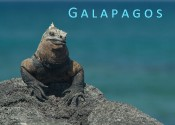 Featured galapagos