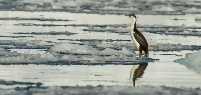 Antarctic Peninsula Day 2